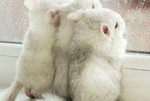癒される動物たち
