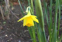 Spring time at Raithwaite / Spring time at Raithwaite Estate
