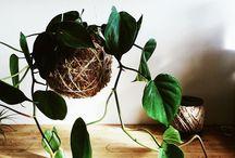 plantestyling