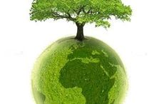 Green Lover / Everything GREEN ~ environment, recycling, mama earth / by Gloria Marrero Favreau, CCP