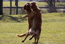 tancujuce zvieratka