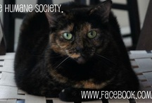 Facebook Timeline Cover Photos / Show your support of Heritage Humane Society with these nifty cover photos for you Timeline.  Simply open the full image and save the photo to your computer.  Then upload your new cover photo to Facebook to help spread the word about adoptable animals.