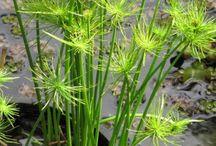 plantas aquáticas filtro