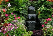 Gardens - Ogrody