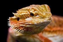 Evolution Reptiles Care Sheets