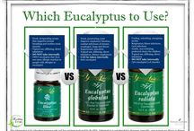 Young Living Oil Info