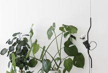 # HOUSE PLANTS