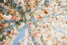 Swanson Wedding / by Shelby Robb