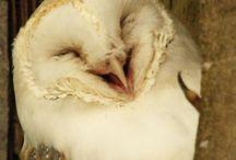 OWLS!!