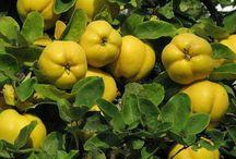 Marmelos pêssegos cáqui