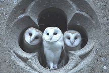 Owls-the bird of wisdom