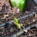 Garten Gemüse und Co.