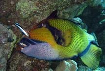 Gli abitanti del mare / il mondo fantastico sottomarino: pesci e non solo....