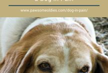 Old Dog Care / Tips and articles on how to care for our old dogs holistically.