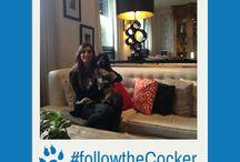 Follow the cocker! / Take a selfie with Joe Cocker.