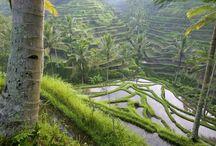Architecture - Traditional Landscape