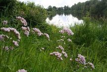 Suomen luonnon kasveja / näetkö sinä