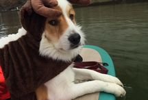 Dogs Love SUP