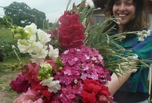 Organic Flowers / Bouquets and arrangements of certified organic flowers from the farm. Many arrangements are also edible.