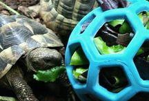 tortoise toys