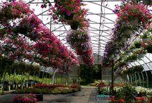 The Nursery Business / Profiling ideas of plant nursery businesses