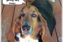 I LOVE Basset Hounds!!! <3 / by Terisa LaLonde