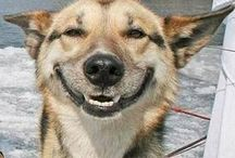 Funny Dog Pics / The funniest and cheekiest dog pics from all corners of the internet!