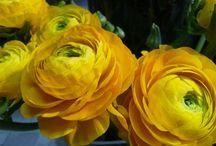 Blumen & Pflanzen im Frühling