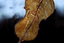 music nature...