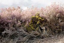 Photography / Fine art photography from Irish photographers