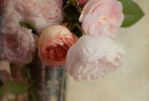 Paintings of Flowers