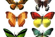 Бабочки и  не только