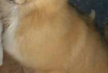 puppies taylor needs