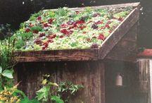 zeleného střechy