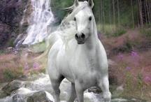 Cavalli bellissimi