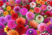 Amazing plant life