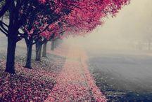 Nature *-*