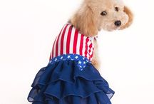 Pooch Dresses / Complete your Pooch's wardrobewith the many new Stylish Dog Dresses. From Pleated Tennis Dresses to all American Patriotic Red, White and Blue Dresses as well as a large selection of Chevron Patterned Dresses, you will find many dresses to add to your dog's wardrobe. Many of the dog dresses are accentuated with layered ruffles, bows and flowers adding special attention to detail.