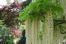garden and outdoor ideas / by Sinikka Nikander