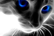 Cat Effect