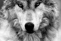Wolf tattoo design