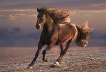 Horses and Other Beautiful Animals