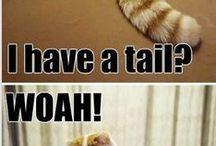 Schattige katten