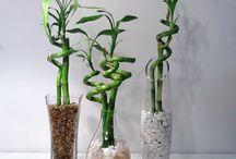 Repurpose Vases