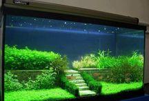 aqvarisztika