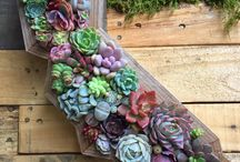 Love of Succulents / Succulent eye candy
