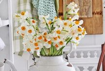 Daffodils - Narzissen