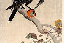 Birds japan