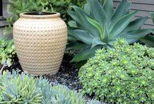 Succulentes & plantes grasses