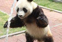 Animale dings / Tijger panda en meer